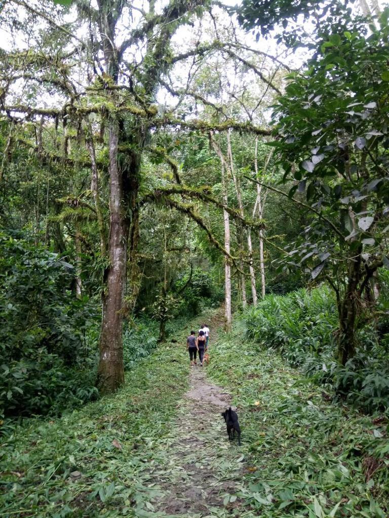 Actividad natural en Buga