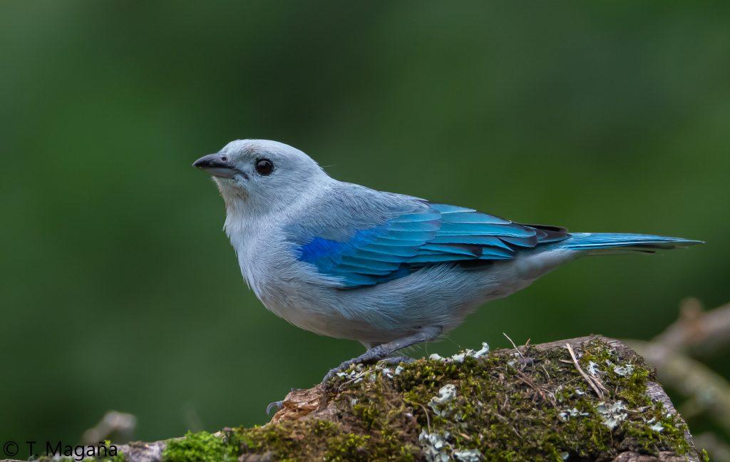 Avistamiento de aves Colombianas